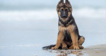ล้ำหน้าโชว์ dog-351x185 Google Photos เพิ่มฟีเจอร์จำภาพสัตว์เลี้ยงของผู้ใช้ได้อัตโนมัติ