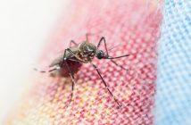 ล้ำหน้าโชว์ mosquito-214x140 ประเทศแทนซาเนียนำโดรนมาประยุกต์ใช้ในการกำจัดลูกน้ำยุง