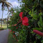 ล้ำหน้าโชว์ ชมตัวอย่างภาพถ่ายจากกล้อง Pixel 3a XL ถึงจะกล้องเดียวก็สวยเทพได้ smartphone sample images mobile Google Pixel 3a XL Google Pixel 3a camera phone